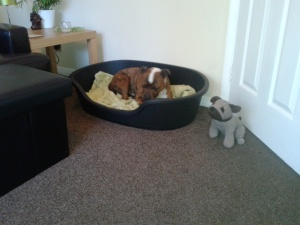 Rocco in his new bed